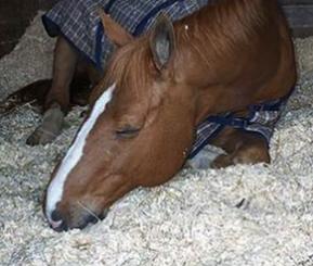 hemp hurd animal bedding,